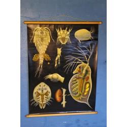 """Affiche pédagogique """"insectes"""" années 60"""