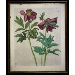 Cadre botanique XIXème siècle