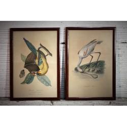 Cadres ornithologie début XXème siècle