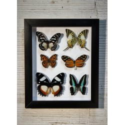 Cadre coffret 6 papillons
