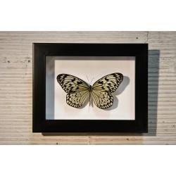 Cadre coffret papillon Estia Leuconoe