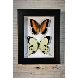 Cadre coffret 2 papillons
