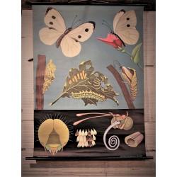 Affiche scolaire Papillons années 60