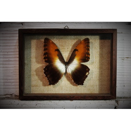 Cadre coffret papillon années 60