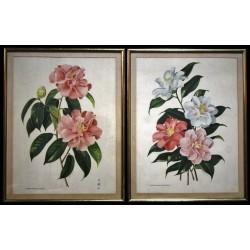 """Cadres """"Camellia Japonica"""" années 50"""