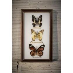 Cadre papillons x 3 années 80
